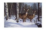 Zone 1 Whitetail Giclee Print by Bruce Miller