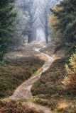 Hiking Trail Photographic Print by Cora Niele