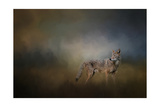 Coyote at Shiloh Giclee Print by Jai Johnson