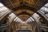 Natural History Museum I Photographic Print by Giuseppe Torre