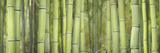 Bamboo Scape Photographic Print by Cora Niele