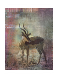 Africa Antelope Giclee Print by Greg Simanson
