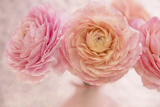 Pink Persian Buttercup Bouquet Photographic Print by Cora Niele