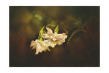 Gardenia in the Garden Giclee Print by Jai Johnson