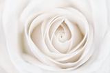 Weiße Rose Fotografie-Druck von Cora Niele