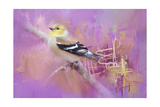 Abstract Goldfinch Giclee Print by Jai Johnson