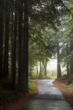 Forest Road Photographic Print by Lance Kuehne