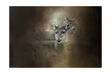 In Our Woods Giclee Print by Jai Johnson