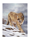 Cougar Giclee Print by Geno Peoples