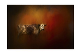 A Cow in Autumn Giclee Print by Jai Johnson