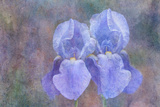 Iris Blue Rhythm Reproduction photographique par Cora Niele