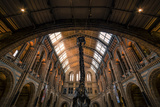 Natural History Museum III Photographic Print by Giuseppe Torre
