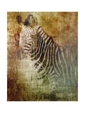 Africa Zebra Giclee Print by Greg Simanson