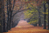Beech Lane Photographic Print by Cora Niele