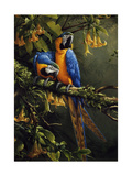 Blue and Gold Macaw Giclee-trykk av Jackson, Michael