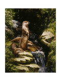 Otters Giclee Print by Michael Jackson