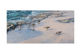 Sanderlings Giclee Print by Michael Jackson