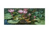 Lily Pond Giclee Print by Michael Jackson