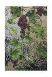 Grapes Giclee Print by Michael Jackson