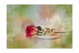 Christmas Rose Giclee Print by Jai Johnson