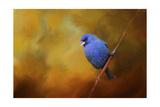 Blue Bunting in Autumn Reproduction procédé giclée par Jai Johnson