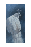 White Peahen Giclee Print by Michael Jackson