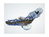 The Eagle Giclee Print by John Van Straalen