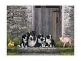 Farm Animal Stable Giclee Print by John Zaccheo