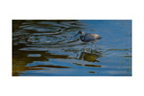 Ripples Giclee Print by Michael Jackson