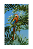 Scarlet Macaw 1 Gicléetryck av Jackson, Michael