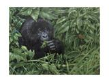 Gorilla 1 Giclee Print by Michael Jackson