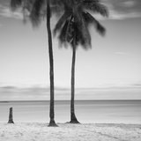 2 Palmeras Photographic Print by Moises Levy