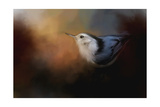 Nuthatch in Autumn Giclee Print by Jai Johnson