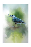 Summer Nuthatch Giclee Print by Jai Johnson