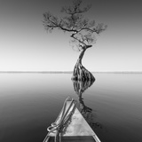 Alone with My Tree Photographic Print by Moises Levy