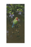 Peach Faced Lovebird 2 Impression giclée par Michael Jackson
