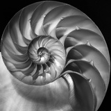 Nautilus 2 Photographic Print by Moises Levy