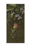 Peach Faced Lovebird Giclee Print by Michael Jackson