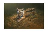 Tiger Cub Giclee Print by Michael Jackson