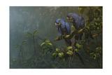 Oiseaux bleus Reproduction procédé giclée par Michael Jackson