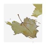 Fall Leaf 2 Giclee Print by Karen Williams