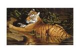 Tiger Giclee Print by Michael Jackson