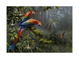 Jewels of the Forest Giclee-trykk av Jackson, Michael