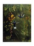 Hummingbird Giclee Print by Michael Jackson
