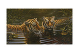 Tigers Giclee Print by Michael Jackson