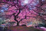 Pink Tree 2 Fotografie-Druck von Moises Levy