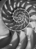 Nautilus 5 Photographic Print by Moises Levy