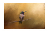 Hummingbird in Autumn Giclee Print by Jai Johnson