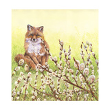 Pussywillows Fox Giclee Print by Wendy Edelson
