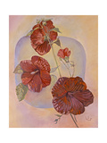 Red Hibiscus Giclee Print by Judy Mastrangelo
